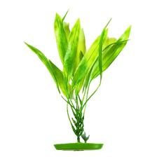 PLANTE PLASTIQUE MARINA AMAZON SWORD