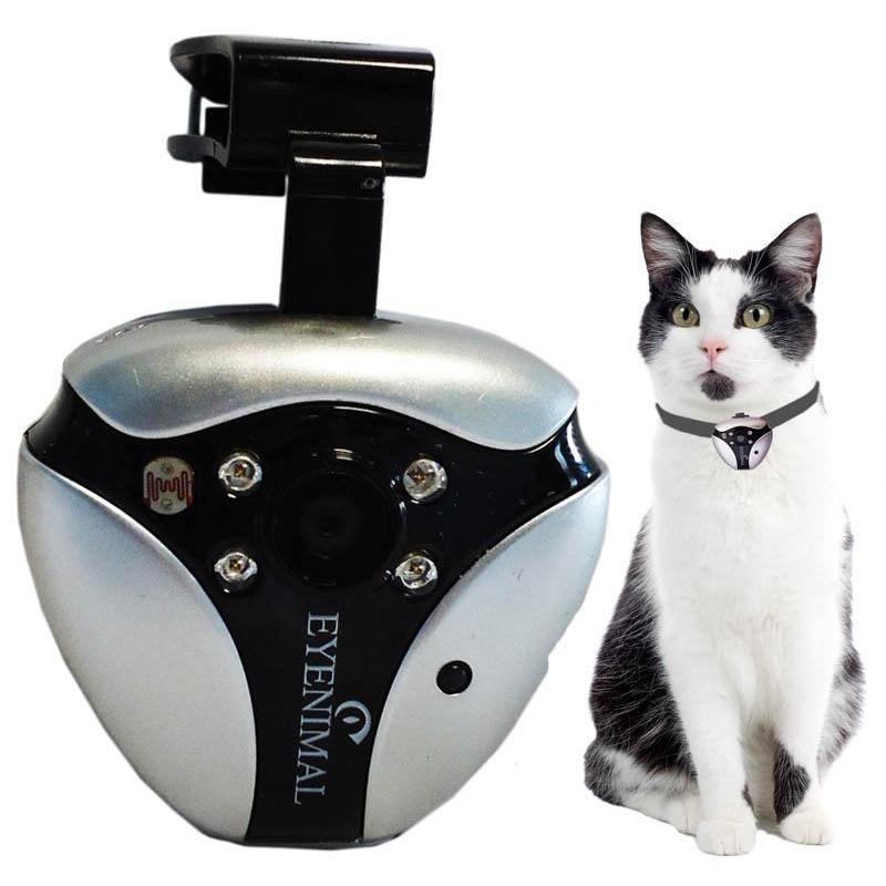 Chat and camera