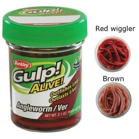 GULP! ALIVE ANGLE WORM BERKLEY GULP ALIVE ANGLE WORM - PACK OF 60