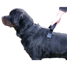 SECURITY HANDLE DOG HARNESS MARTIN SELLIER INTERVENTION